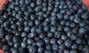 Варенье-желе из черники – пошаговый рецепт с фото. Как приготовить