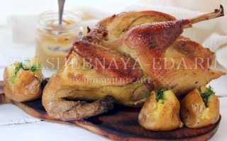 Курица в сметанно-горчичном соусе – пошаговый рецепт с фото. Как приготовить