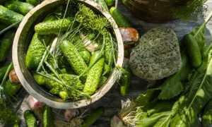 Малосольные огурчики городские – пошаговый рецепт с фото. Как приготовить