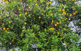 Оладьи с лимонным кремом – пошаговый рецепт с фото. Как приготовить